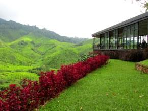 Malaysian tea planations