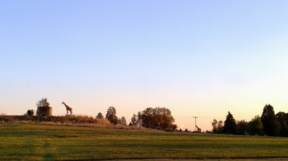 Aaand one last giraffe picture in the sunset before we left