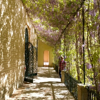 Serene Walkways at the Alcazar