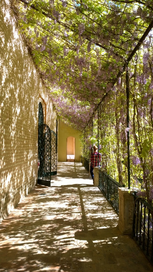Serene Walkways at the Alcazar