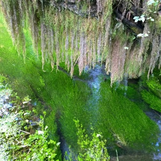 Mossy Greens in the Hoh Rain Forest