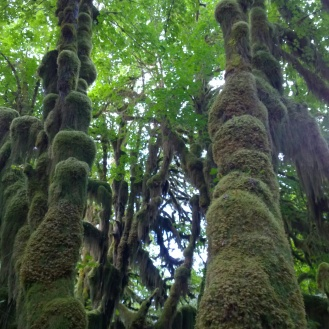 Magical Hoh Rain Forest